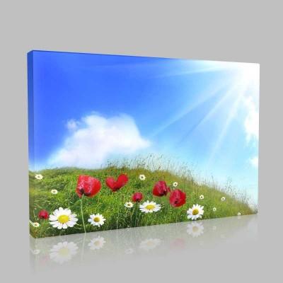 Çayır Ve Çiçekler Kanvas Tablo