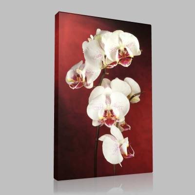 Beyaz Orkide 2 Kanvas Tablo