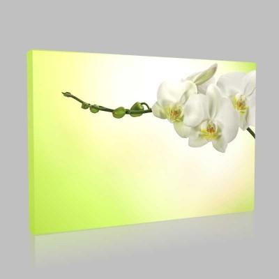 Beyaz Orkide 3 Kanvas Tablo