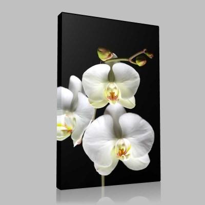 Beyaz Orkide Yakın Çekim Kanvas Tablo