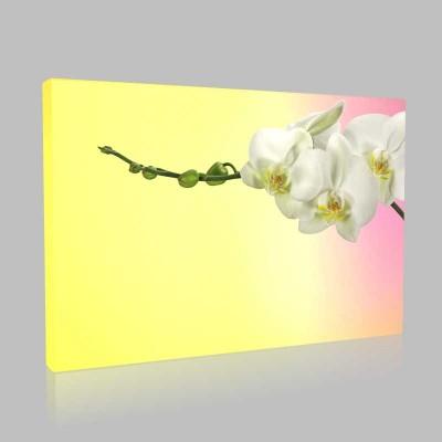 Beyaz Orkidenin Şıklığı Kanvas Tablo