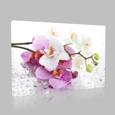 Beyaz Ve Pembe Orkideler Kanvas Tablo