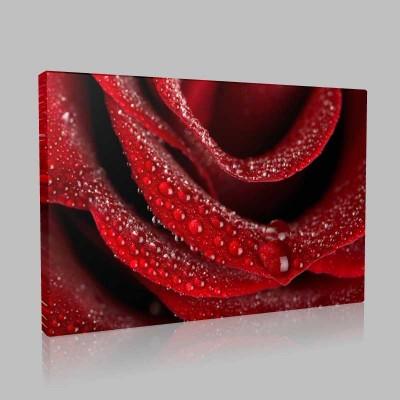 Damlacıklı Kırmızı Gül Kanvas Tablo