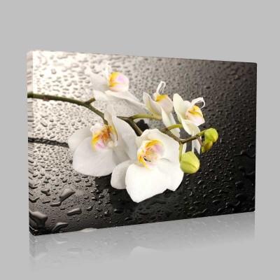 Damlacıklar Ve Orkide Kanvas Tablo