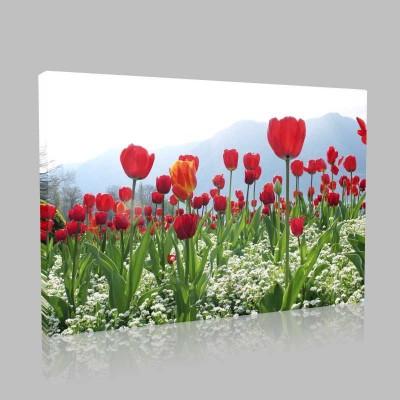 Gelincik Bahçesi Kanvas Tablo