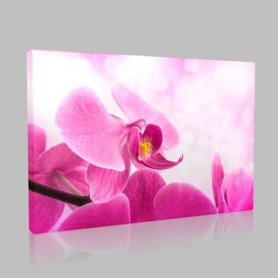 Işıltılı Pembe Orkide Kanvas Tablo