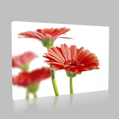 Kırmızı Çiçekler Kanvas Tablo