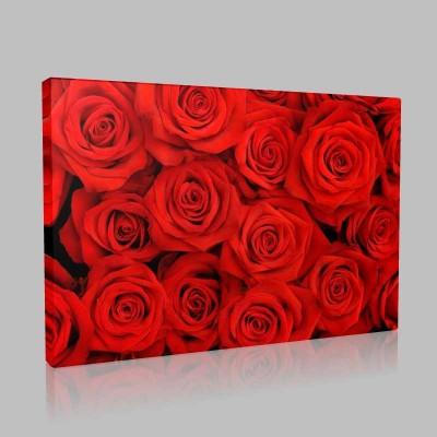 Kırmızı Güller Kanvas Tablo