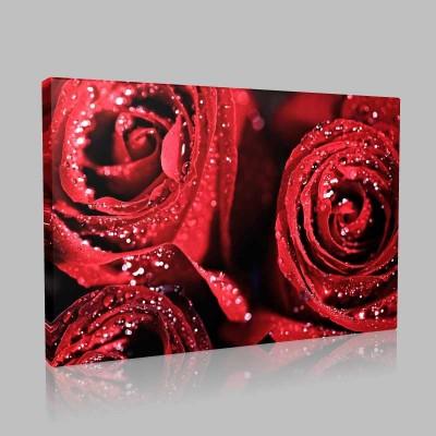 Kırmızı Güllerin İşıltısı  Kanvas Tablo