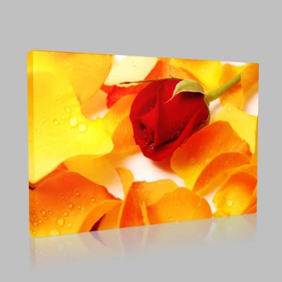 Kızaran Sarı Güller Kanvas Tablo