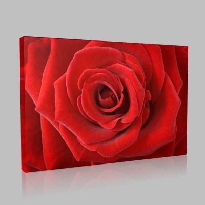 Kadife Kırmızı Kanvas Tablo