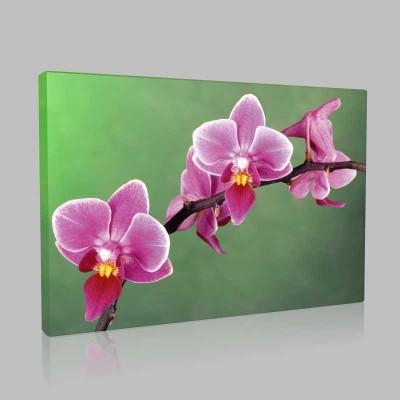 Lal Orkide Kanvas Tablo