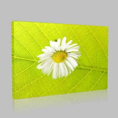 Leaf And Camomile Kanvas Tablo