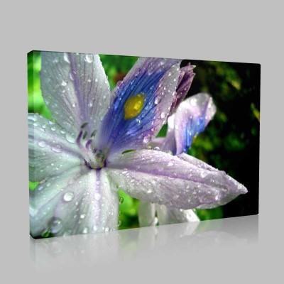 Lillies Kanvas Tablo