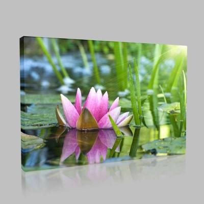 Lotus İşık Hüzmesi Kanvas Tablo