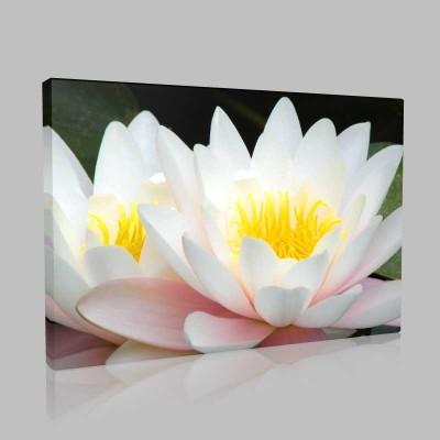Lotus Kanvas Tablo