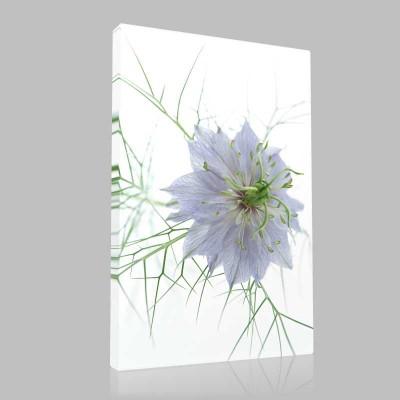 Mavi Katmer Çiçeği Kanvas Tablo