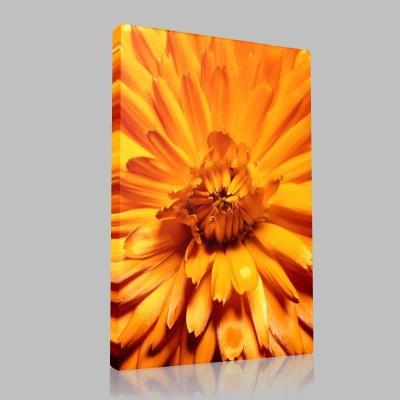 Orange Chrysanthemum Kanvas Tablo