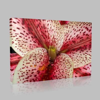 Orkide Zoom Kanvas Tablo