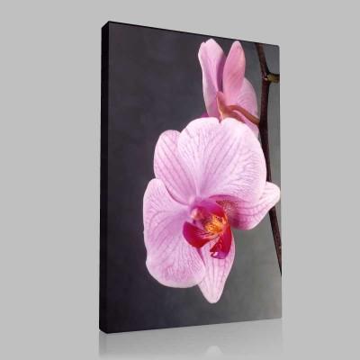 Pempe Orkide Kanvas Tablo