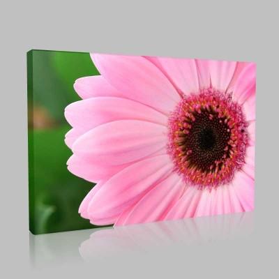 Pink Gerberas Kanvas Tablo