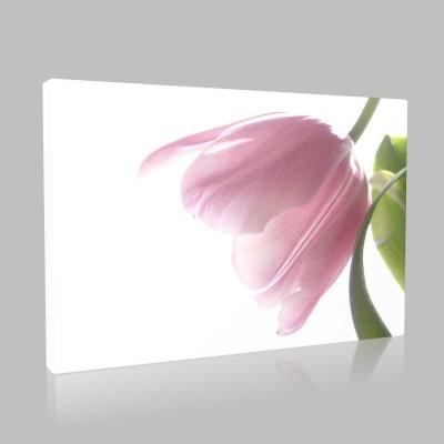 Pinky Tulip Kanvas Tablo