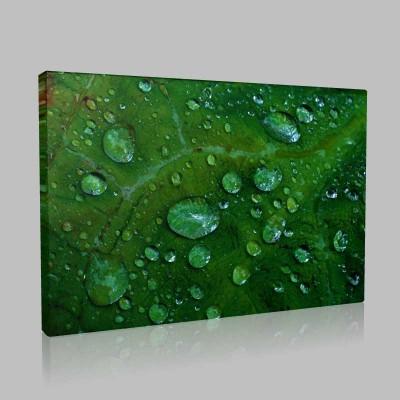 Raindrops On Leaf Kanvas Tablo