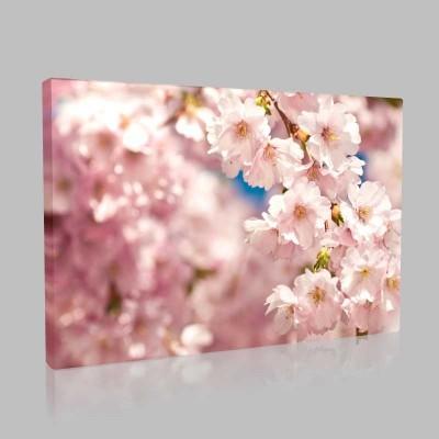 Sakura Kanvas Tablo