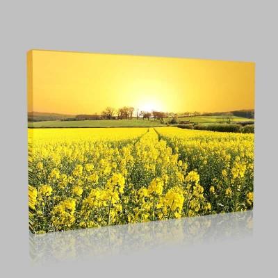 Sarı Doğa Kanvas Tablo