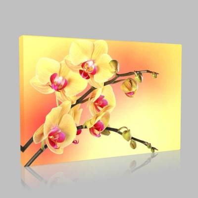 Sarı Kırmızı Orkide Kanvas Tablo