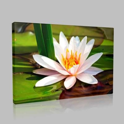 Still Lotus Kanvas Tablo