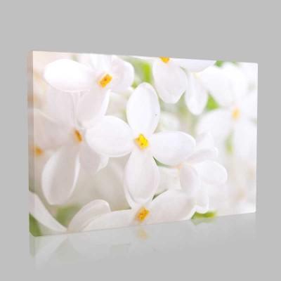Still Magnolias Kanvas Tablo