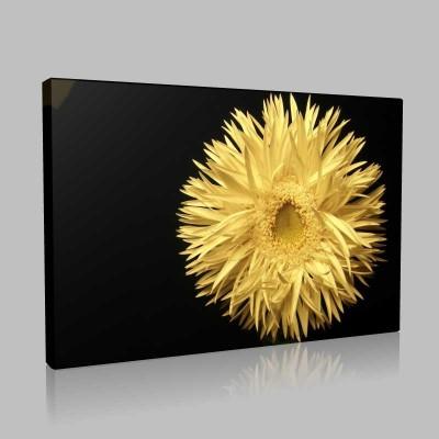 Tek Dal Çiçekler Kanvas Tablo