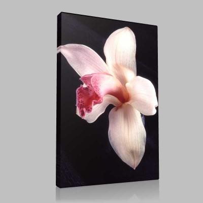 Tek Orkide Kanvas Tablo