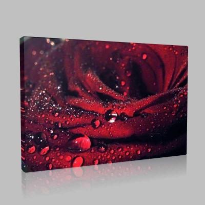 Yağmur Damlacıklı Kırmızı Gül Kanvas Tablo