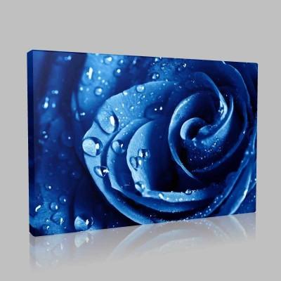 Yağmur Damlalı Mavi Gül Kanvas Tablo