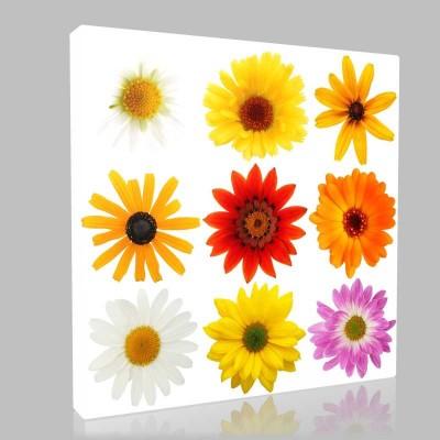Çeşitli Çiçekler Kanvas Tablo
