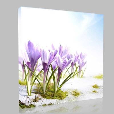 Karda Açmış Mor Çiçekler Kanvas Tablo