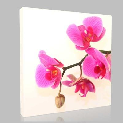 Poz Veren Orkide Kanvas Tablo