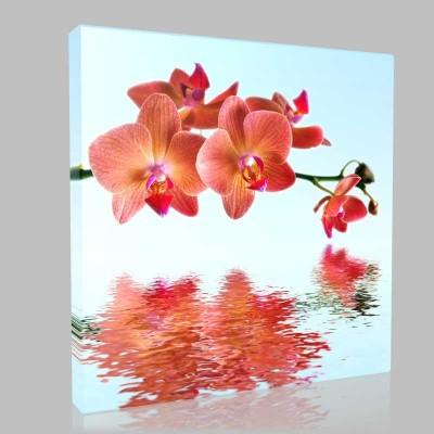 Turuncu Orkide Kanvas Tablo