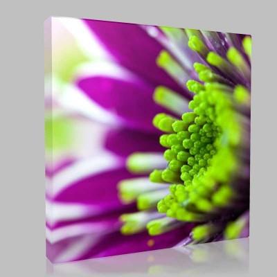 Violet Chrysanthemum Kanvas Tablo