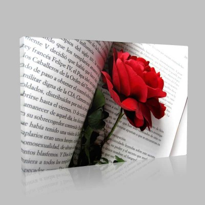Kitap Ve Kırmızı Gül Kanvas Tablo