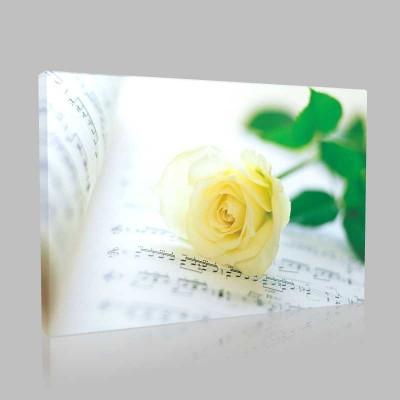 Notalar Ve Sarı Gül Kanvas Tablo