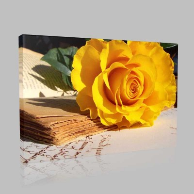 Sarı Gül Ve Mektup  Kanvas Tablo