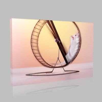 Hamster Kanvas Tablo