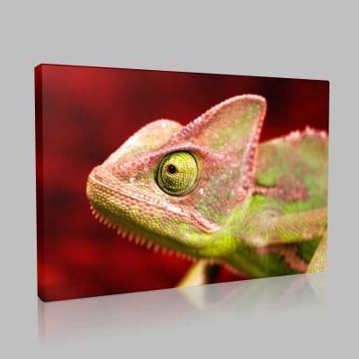 Renkli Bukalemun Kanvas Tablo