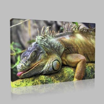 Uykusu Gelmiş İguana Kanvas Tablo