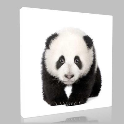 Beyaz Fonda Panda Yavrusu Kanvas Tablo