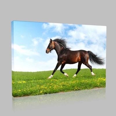 Çayırda Koşan Arap Atı Kanvas Tablo