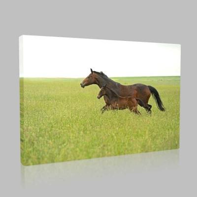 Çayırda Koşan At Ve Yavrusu Kanvas Tablo